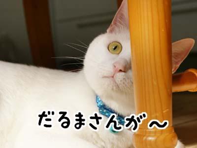 cat685