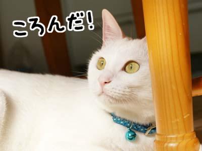 cat686