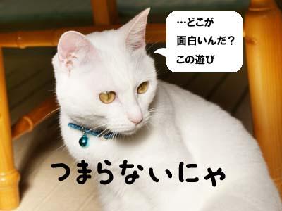 cat687