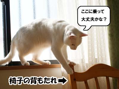 cat688