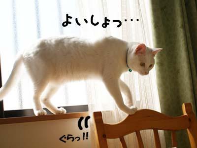 cat689