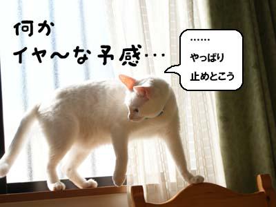 cat690