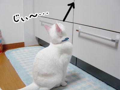 cat691
