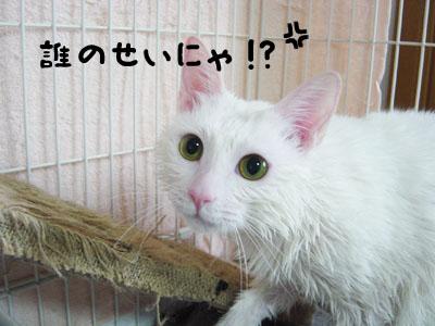 cat695