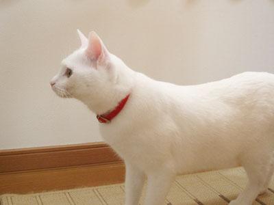 cat696