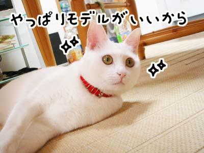 cat697