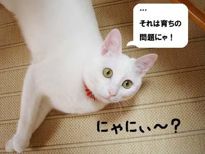 cat698