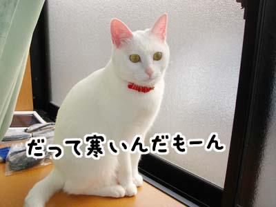 cat699