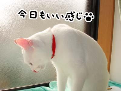 cat702