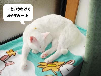 cat703