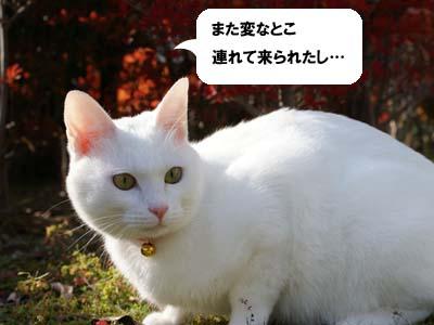 cat709