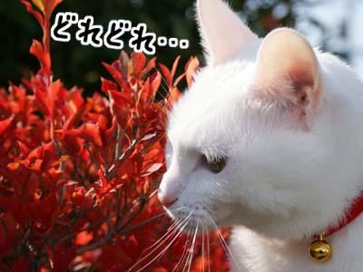 cat710