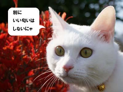 cat711