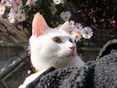 cat712