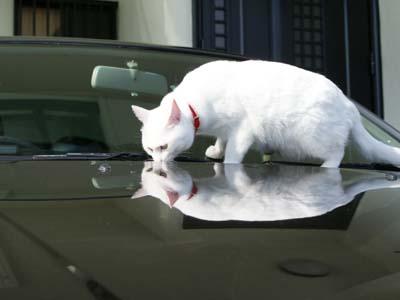 cat713