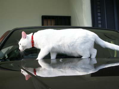 cat714