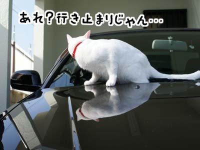 cat715