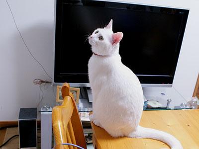cat717
