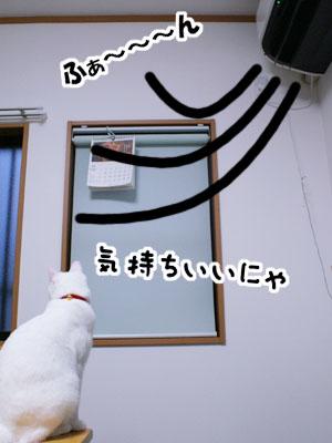 cat718