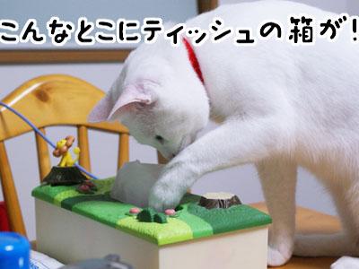 cat722