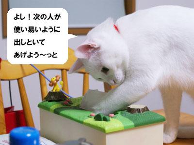 cat723
