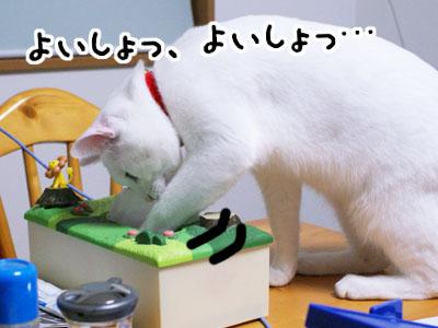 cat724