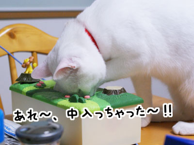cat725