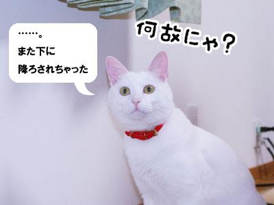 cat726