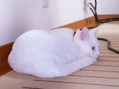cat727