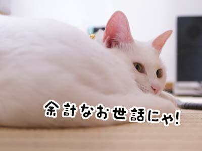 cat728