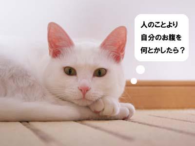 cat729