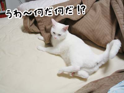 cat732