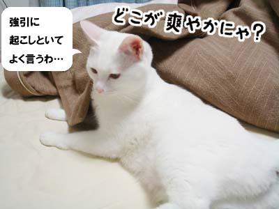 cat733