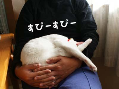cat735