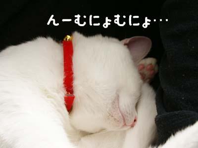 cat737