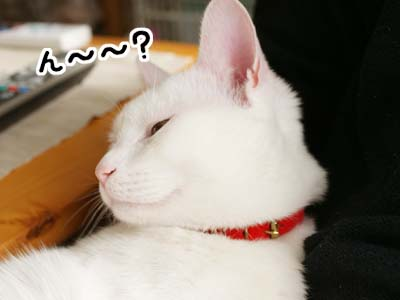 cat738