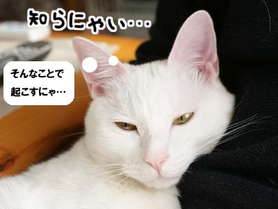 cat739