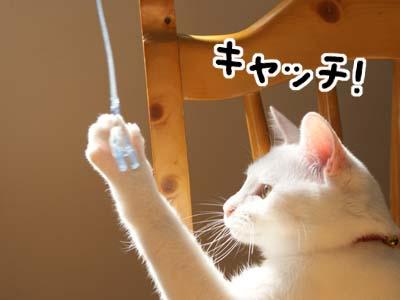cat743
