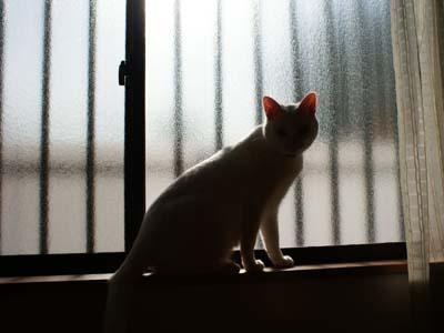 cat750