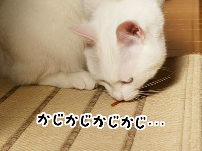 cat756