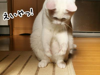 cat757