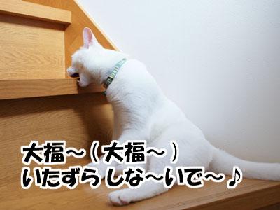 cat758