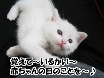 cat761