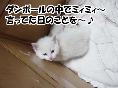 cat762