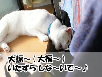 cat763