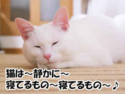 cat764