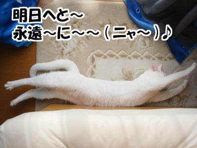 cat765