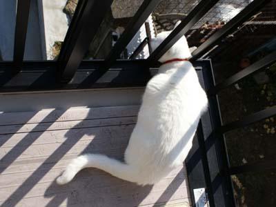 cat766