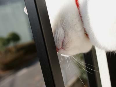 cat768