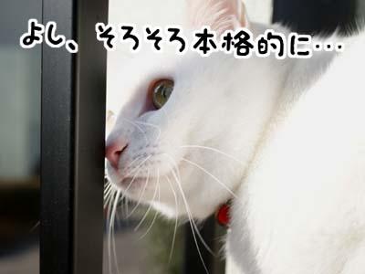 cat769